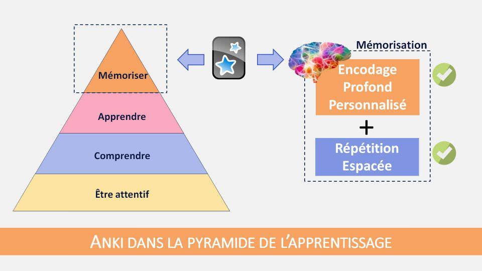 Anki est un outil exceptionnel pour doper votre pouvoir de mémorisation, mais il ne dispense pas des étapes de compréhension et d'apprentissage de l'information
