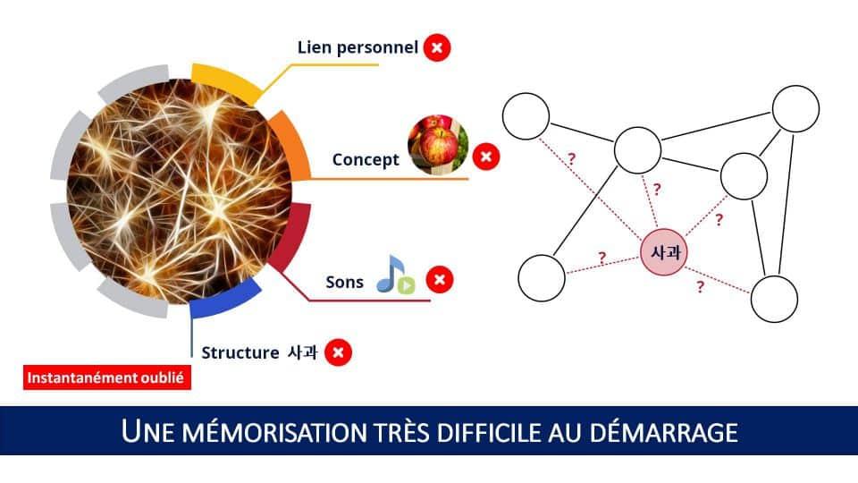 Le modèle des 4 niveaux de traitement de l'information explique pourquoi la mémorisation du vocabulaire est très difficile quand on démarre l'apprentissage d'une langue